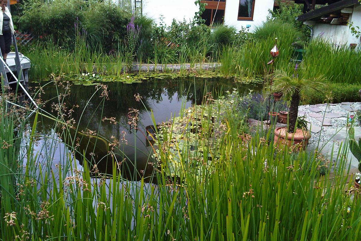 Teich reinigen gemeinde eggenstein leopoldshafen for Teichreinigung mit fischen